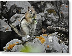 Lunch Time Acrylic Print by Sandy Molinaro