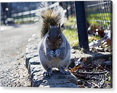 Lunchtime For Central Park Squirrel Acrylic Print