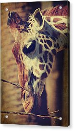 Lunchtime Twigs Acrylic Print by Laurie Search