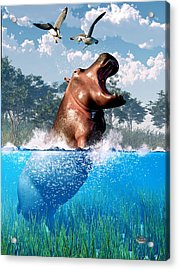 Lunging Hippo  Acrylic Print by Daniel Eskridge