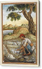 Lunia Salt-digger Acrylic Print by British Library