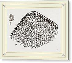 Lunulite En Parasol Acrylic Print by Litz Collection