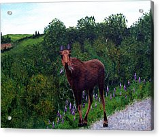 Acrylic Print featuring the painting Lupine Loving Moose by Barbara Griffin
