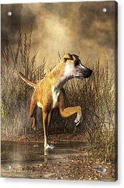 Lurcher Acrylic Print by Daniel Eskridge
