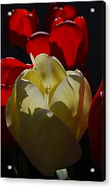 Acrylic Print featuring the photograph Lurking Shadow by Jani Freimann
