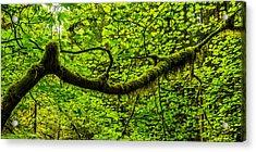 Lush Acrylic Print by Chad Dutson