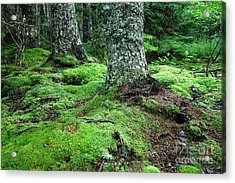 Lush Forest Acrylic Print by Alan Russo