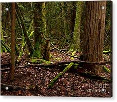 Lush Green Forest Acrylic Print