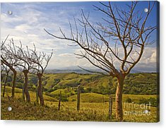Lush Land Leafless Trees 2 Acrylic Print