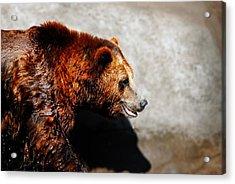 Lwv50015 Acrylic Print