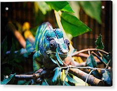 Lwv50016 Acrylic Print