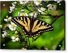 Lwv50054 Acrylic Print
