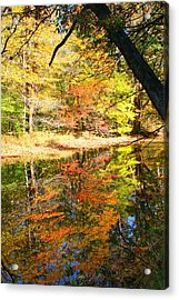 Acrylic Print featuring the photograph Lynn Run-5 by Denise Moore