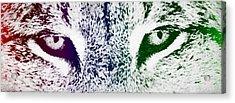 Lynx Eyes Acrylic Print by Aged Pixel