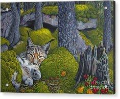 Lynx In The Sun Acrylic Print by Veikko Suikkanen