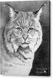 Lynx Acrylic Print by Suzanne Schaefer