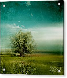 Lyrical Tree - 0109bt01d Acrylic Print by Variance Collections
