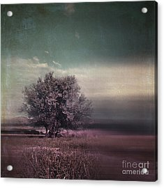 Lyrical Tree - C01dt01 Acrylic Print by Variance Collections