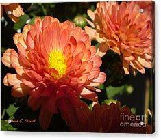 M Bright Orange Flowers Collection No. Bof1 Acrylic Print
