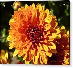 M Bright Orange Flowers Collection No. Bof3 Acrylic Print