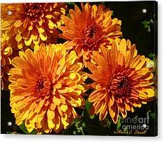 M Bright Orange Flowers Collection No. Bof4 Acrylic Print