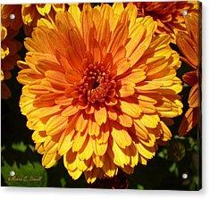 M Bright Orange Flowers Collection No. Bof5 Acrylic Print