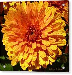 M Bright Orange Flowers Collection No. Bof7 Acrylic Print