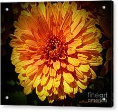 M Bright Orange Flowers Collection No. Bof8 Acrylic Print