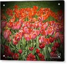 M Color Combination Flowers Collection No. Cc12 Acrylic Print