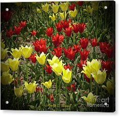 M Color Combination Flowers Collection No. Cc2 Acrylic Print
