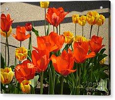 M Color Combination Flowers Collection No. Cc3 Acrylic Print