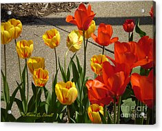 M Color Combination Flowers Collection No. Cc4 Acrylic Print