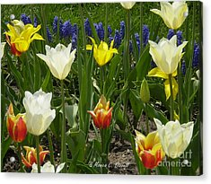 M Color Combination Flowers Collection No. Cc5 Acrylic Print
