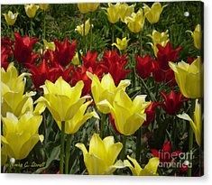 M Color Combination Flowers Collection No. Cc6 Acrylic Print
