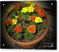 M Color Combination Flowers Collection No. Cc8 Acrylic Print