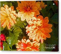 M Shades Orange Flowers Collection No. O3 Acrylic Print