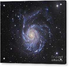 M101, The Pinwheel Galaxy In Ursa Major Acrylic Print by Robert Gendler
