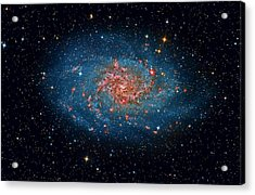 M33 Spiral Galaxy Acrylic Print by Celestial Images