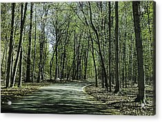M119 Tunnel Of Trees Michigan Acrylic Print