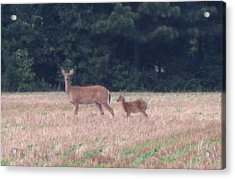 Mable The Female Deer With Harriet The Baby Fawn Acrylic Print by Debbie Nester
