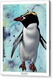 Macaroni Penguin Acrylic Print by Philip Slagter