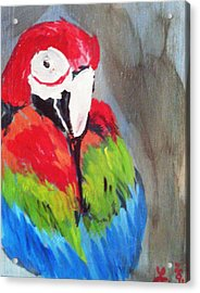 Macaw 2 Acrylic Print