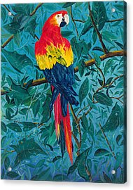 Macaw Acrylic Print by Carl Genovese