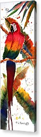 Macaw Feathers Acrylic Print by Patricia Novack
