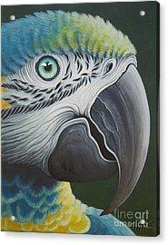 Macaw Head Acrylic Print