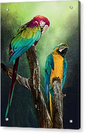 Acrylic Print featuring the photograph Macaws Siesta Time by Brian Tarr