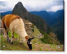 Machu Picchu Peru Acrylic Print by Max Ratchkauskas