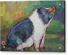 Mack The Pig Acrylic Print