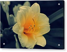 Macro Flower Acrylic Print