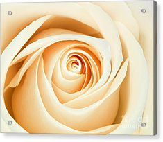 Macro Of A Peach And Pink Rose Acrylic Print